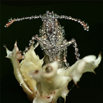 Gang-Gang-Dance-eye-contact-cover-www.lesoreillesdejankev.com